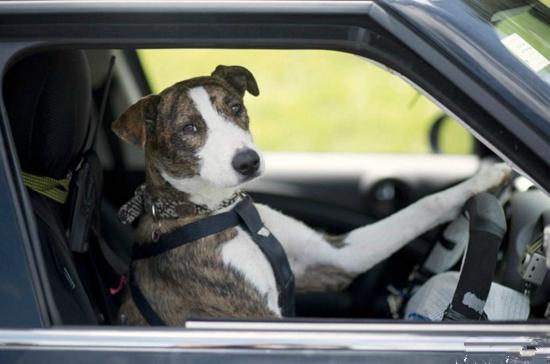动物开车.jpg