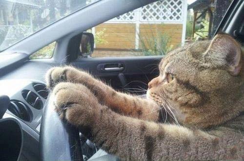 第一次开车有点紧张.jpg