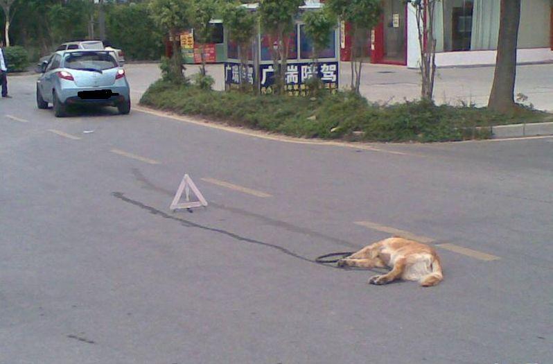 汽车撞狗后 车辆如何走保险理赔